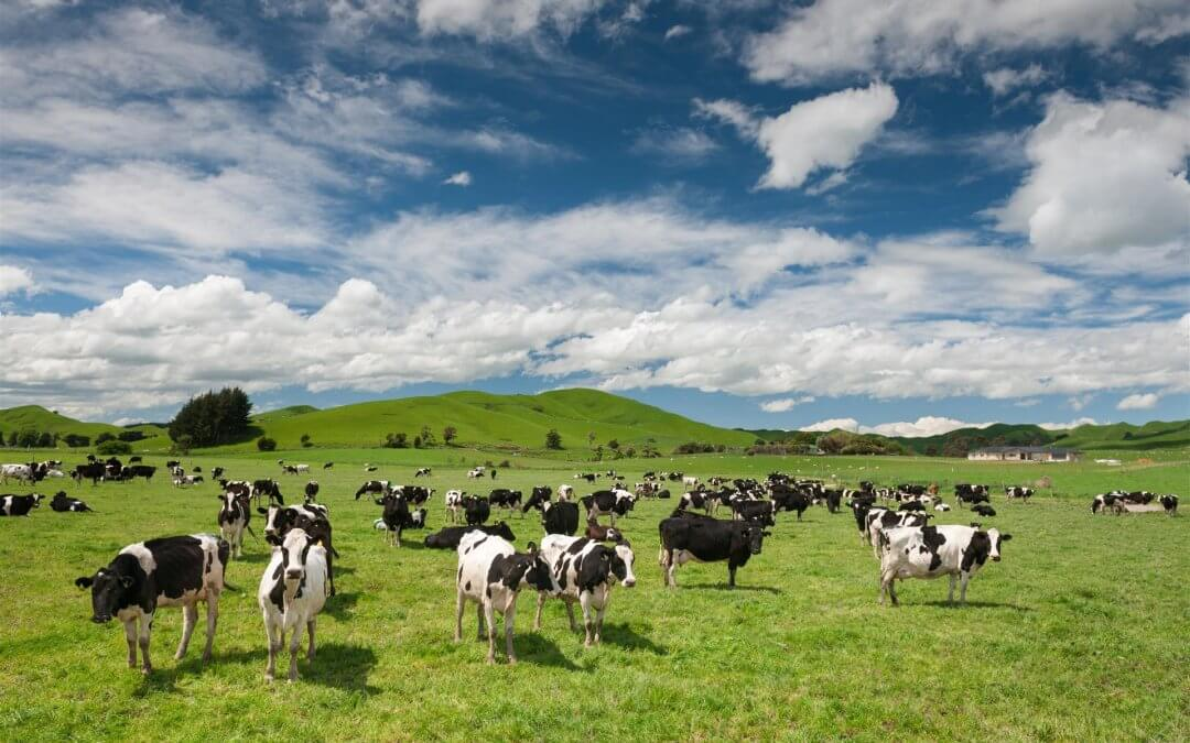 Pastoral sector poised to cope with gas limits